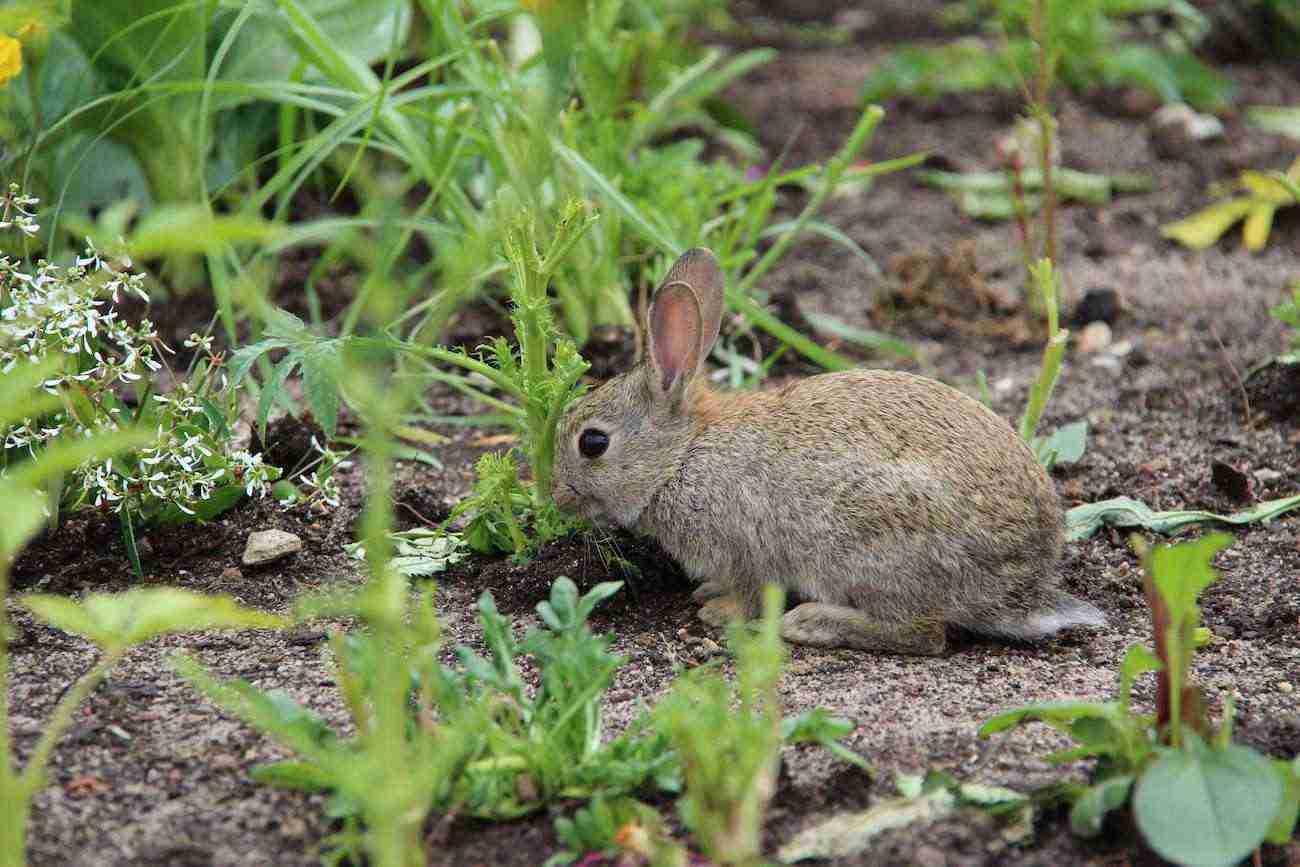 conejos-en-el-campo