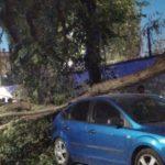 caida de arboles por fuerte viento en herencia 150x150 - Fuertes rachas de viento provocan la caída de troncos y ramas