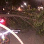 caida de arboles por fuerte viento en herencia1 150x150 - Fuertes rachas de viento provocan la caída de troncos y ramas