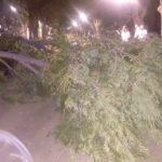 caida de arboles por fuerte viento en herencia3 150x150 - Fuertes rachas de viento provocan la caída de troncos y ramas
