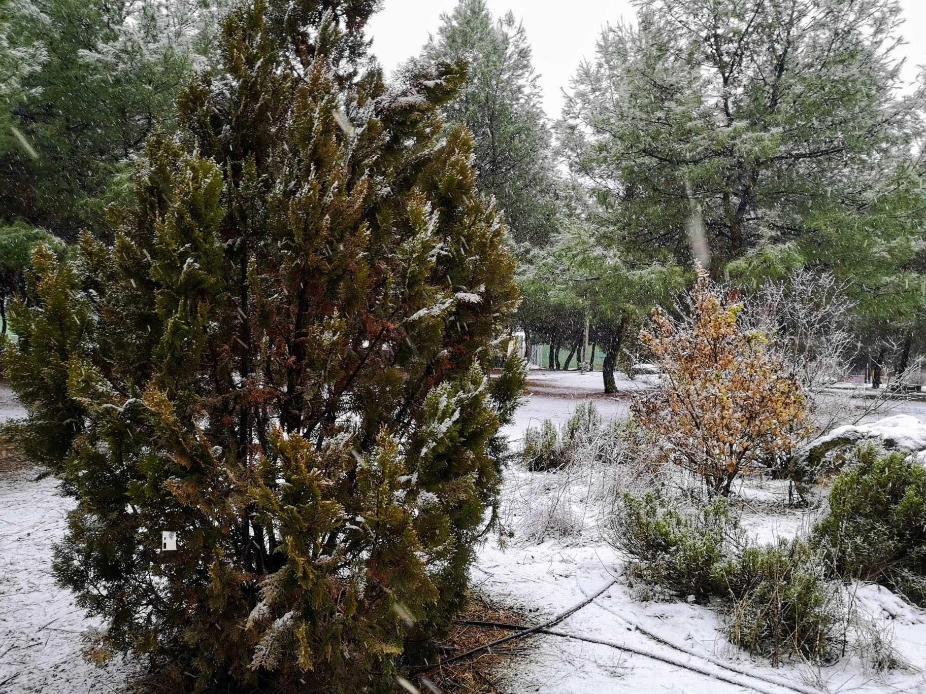 Las nevadas llegan Herencia y a toda Castilla-La Mancha 31