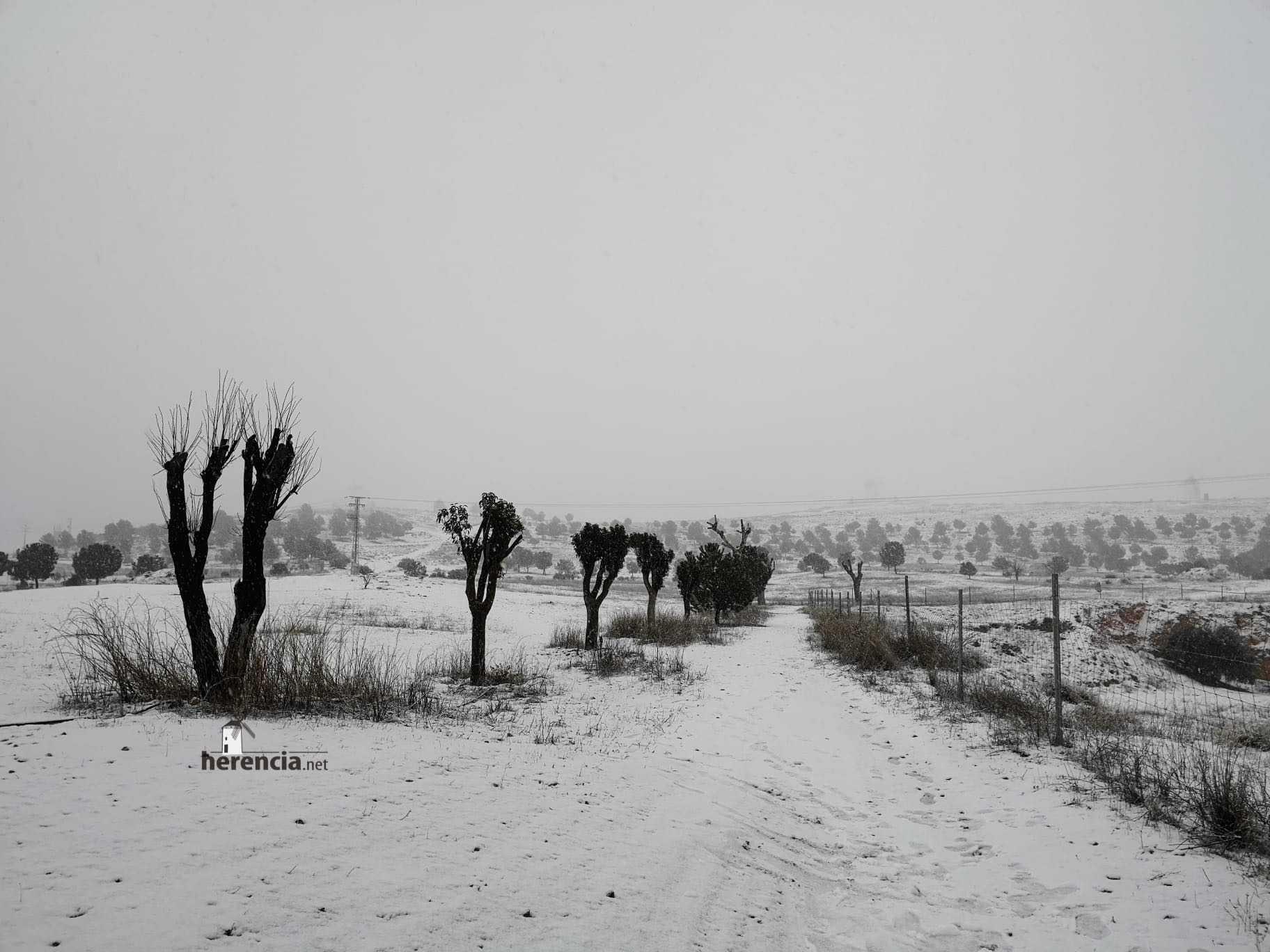 Las nevadas llegan Herencia y a toda Castilla-La Mancha 20
